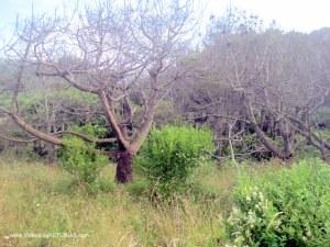 Playa de Barayo en Valdés: zona boscosa
