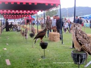 Exconxuraos Llanera: Cetreria: halcones, aguilas, alimoches, buhos